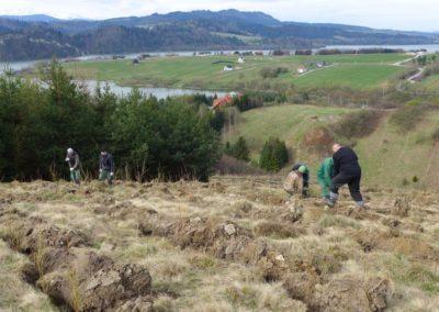 Fundacja Yves Rocher i Fundacja AERIS FUTURO posadzi tysiące drzew w polskich górach!