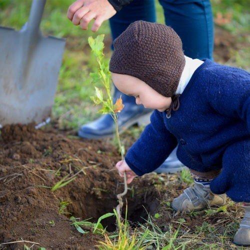 CZAS NA LAS – sadzenie drzew, jako neutralizacja emisji dwutlenku węgla