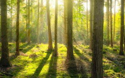 Klimat, a bioróżnorodność – cz. I