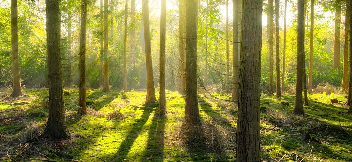 Klimat bioróżnorodność