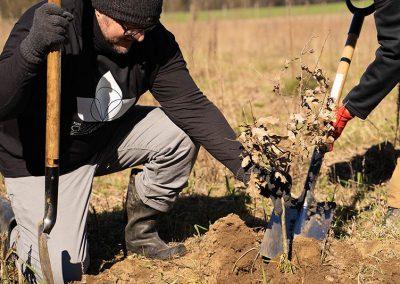 Sadzimy-drzewa-z-firma-Lina-Medical