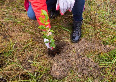 Sadzenie_drzew-Aeris_Futuro (12)
