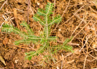 Sadzimy tysiac drzew-Aeris_Futuro (14)