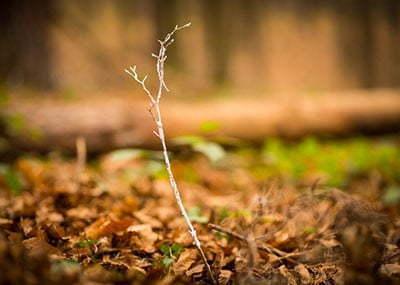 CATERPILLAR – 500 nowych drzew w Polance Hallera
