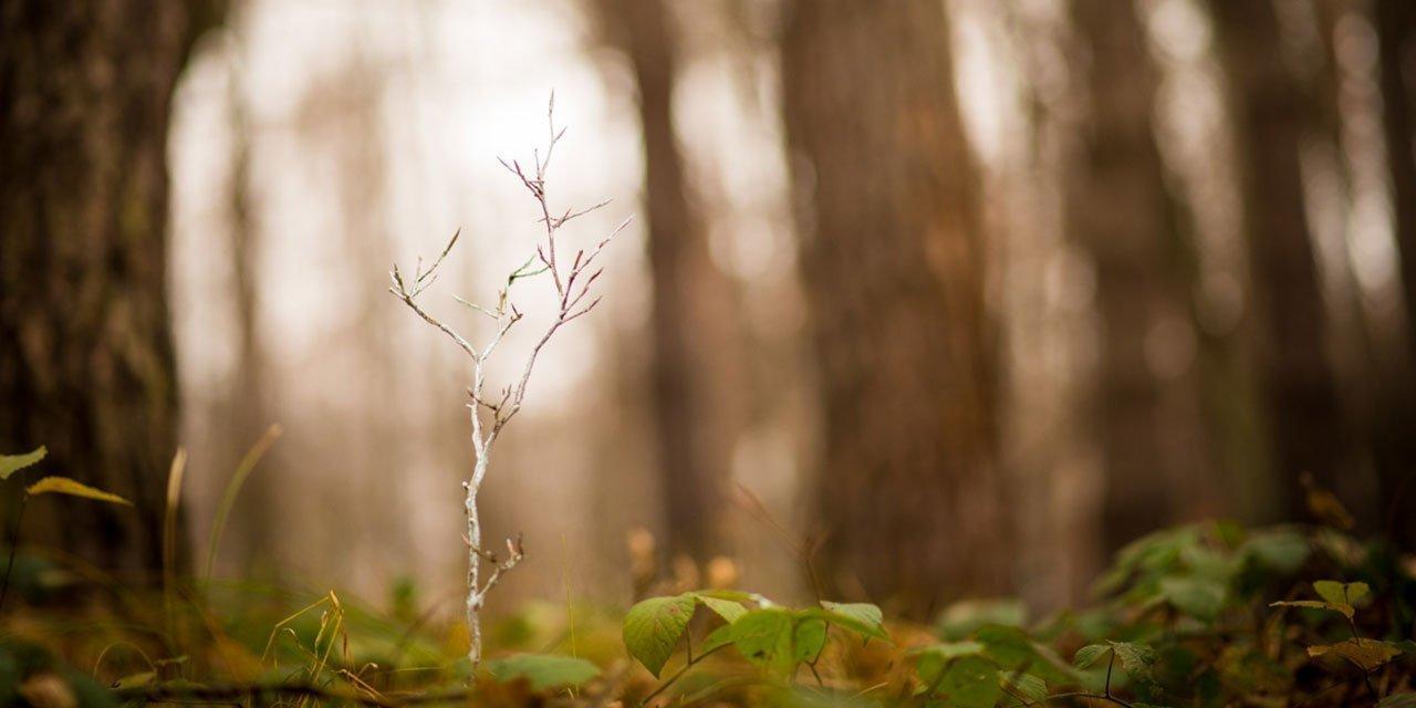 500_drzew_posadzonych_przez_Aeris_Futuro